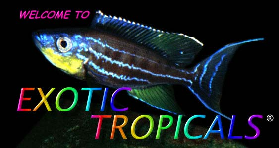 WELCOME TO EXOTIC TROPICALS!  Cichlids and more.
